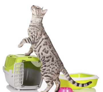 6 Easy Ways to Hide Your Cat Litter Box