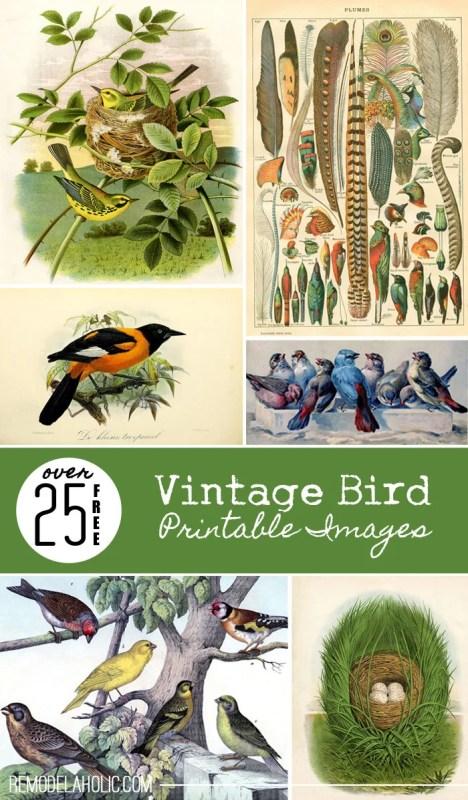 Over 25 Free Vintage Bird Printable Images   Remodelaholic.com