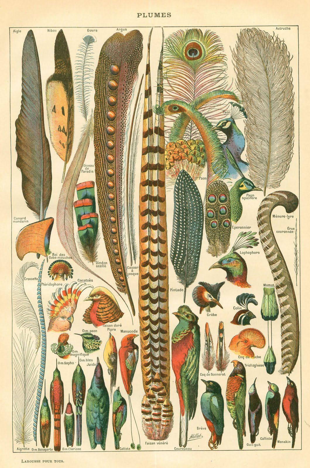 Gwendolynn Hicks Blog 25 Free Vintage Bird Printable Images