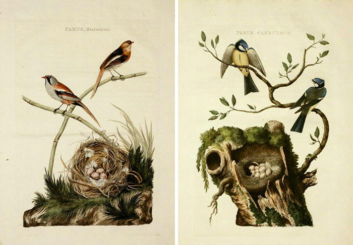 graphic relating to Printable Birds identified as Remodelaholic 25 Cost-free Traditional Fowl Printable Pics