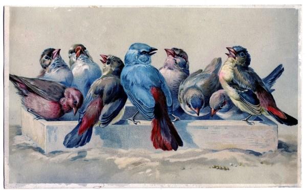 Free Vintage Bird Printable