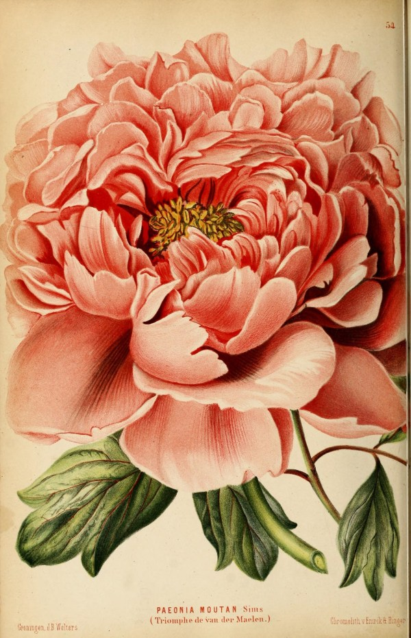 Free Printable Vintage Floral