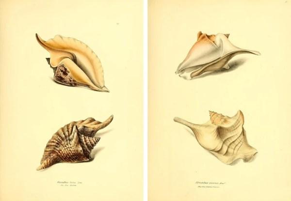 25+ FREE Vintage Printable Aquatic Images via Remodelaholic.com #printable #ocean #coastal