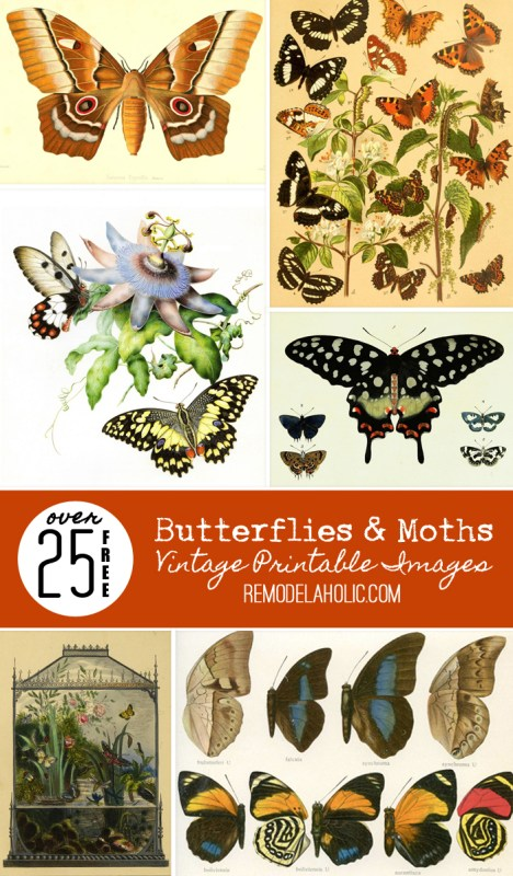Adorn your walls with beautiful butterflies with these free printable vintage images of butterflies and moths, plus tips for printing images and how to decorate with them.