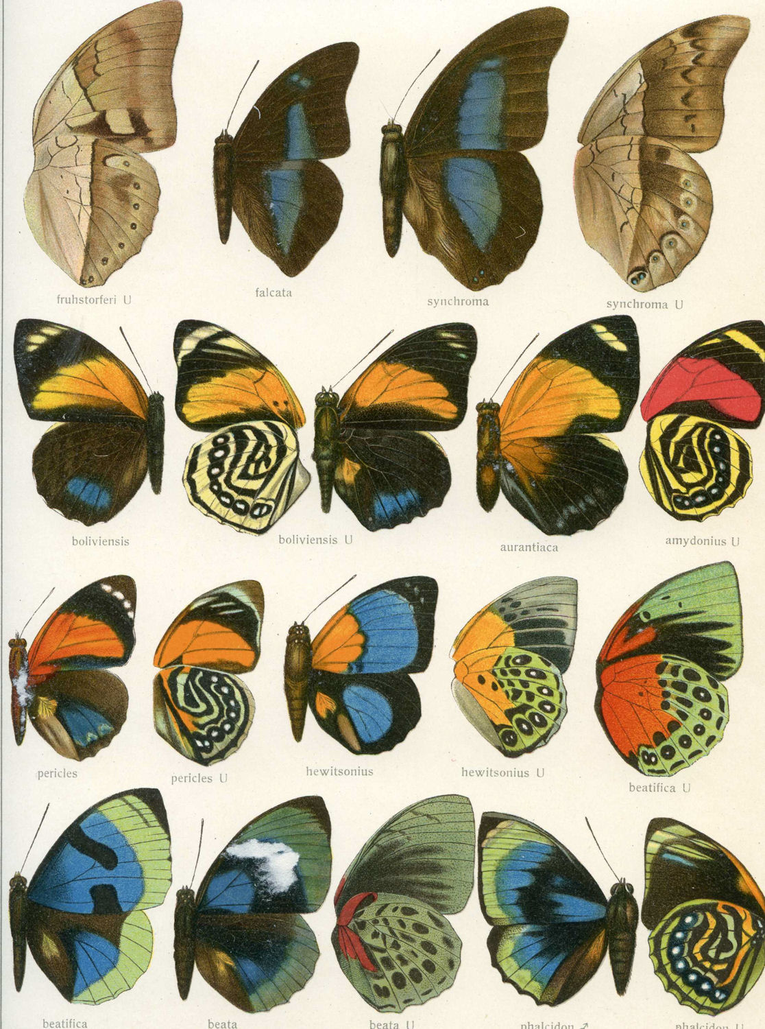 photo relating to Printable Butterflies identified as Remodelaholic 25+ No cost Butterflies and Moths Common