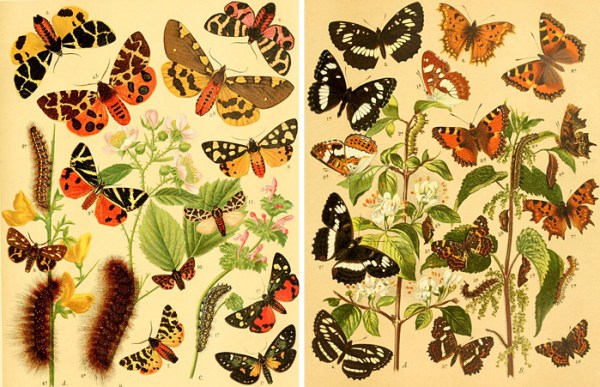 Over 25 beautiful printable FREE vintage images of butterflies and moths. Perfect art for a gallery wall!