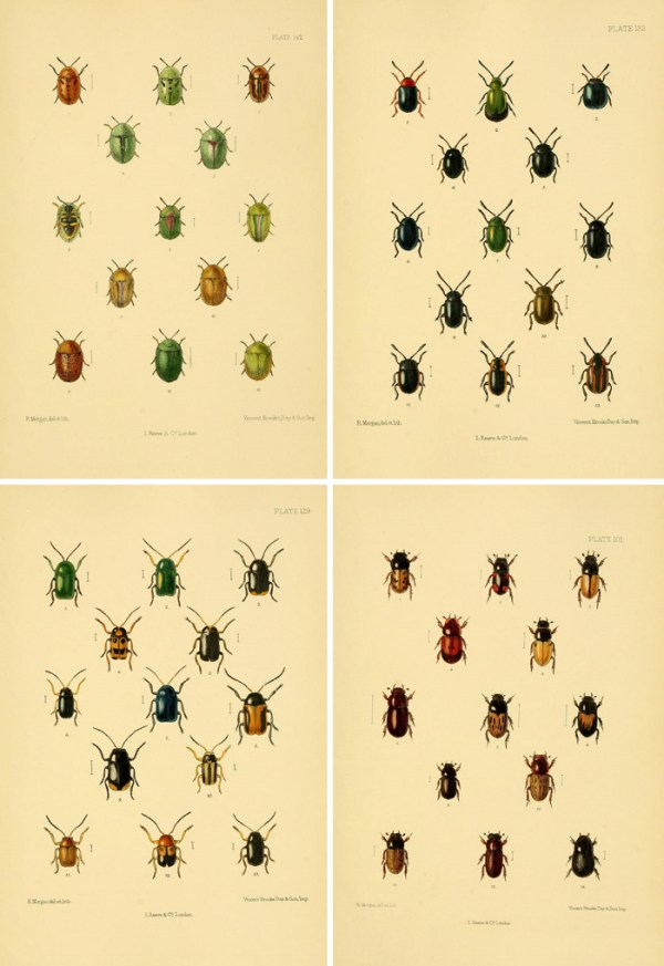 Free printable art - stunning and jewel-like vintage beetle illustrations