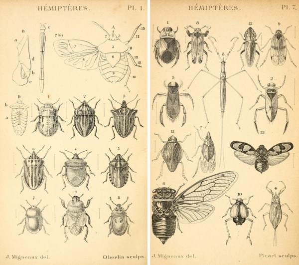 Love the detail on these vintage insect etching - free printables!