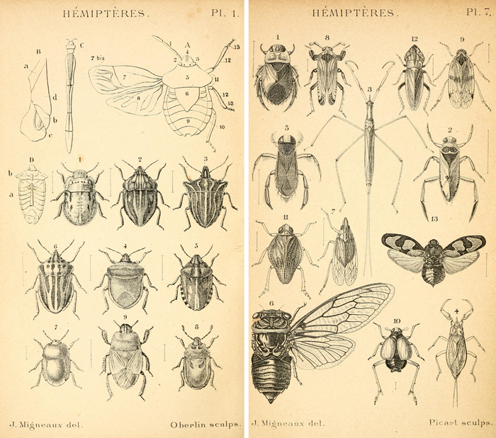 graphic regarding Insect Printable identify Remodelaholic 25+ Totally free Amazing Bugs Typical
