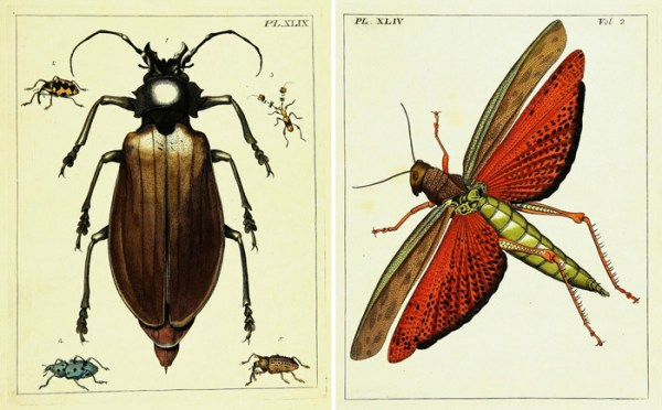 Detailed vintage insect images make gorgeous wall art.