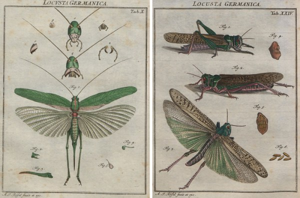 Printable vintage locust images make fascinating wall art