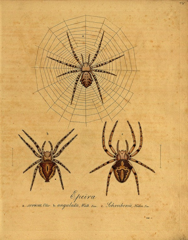 This vintage spider image is more interesting than creepy!