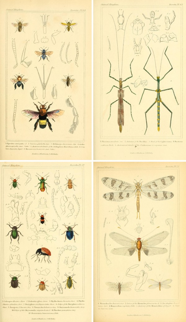 Free vintage printable insect images make great wall art!