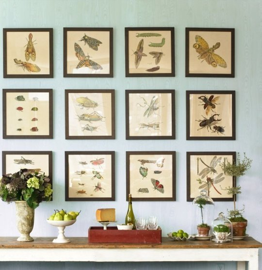 Frame vintage insect prints and display in a grid