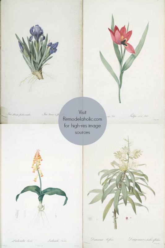 free vintage flower illustrations to print via NYPL @Remodelaholic