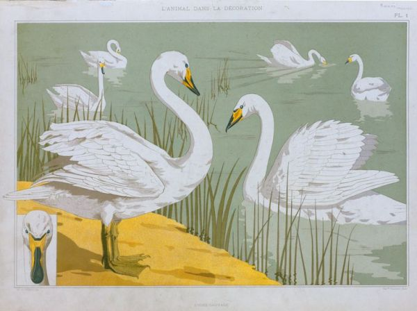 vintage book page print, illustrated swans NYPL