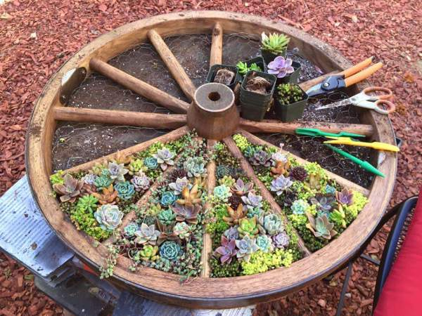 Plant succulents or herbs in a wagon wheel for a fun divided garden