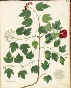 Free Vintage Leaves Image 26