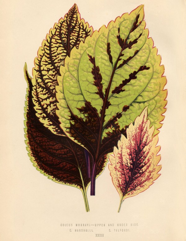 Free Vintage Leaves Image 3