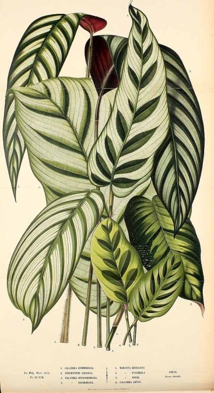 Free Vintage Leaves Image 31