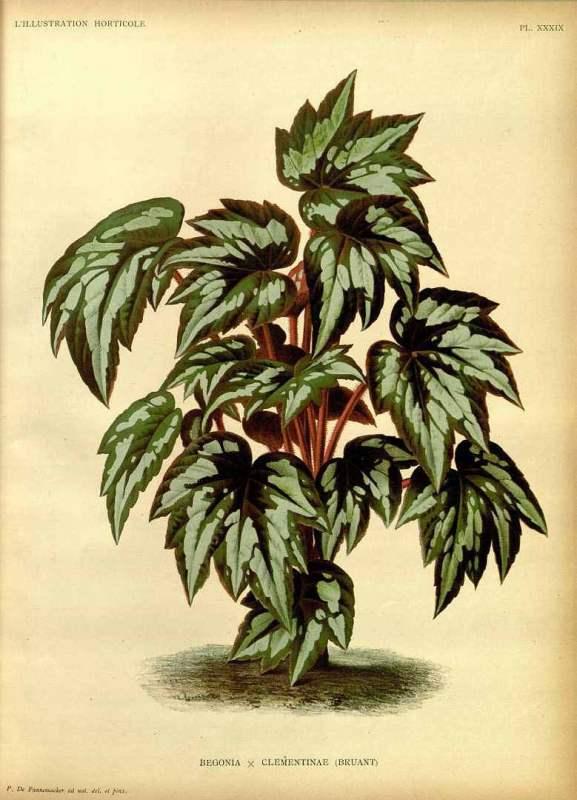 Free Vintage Leaves Image 32