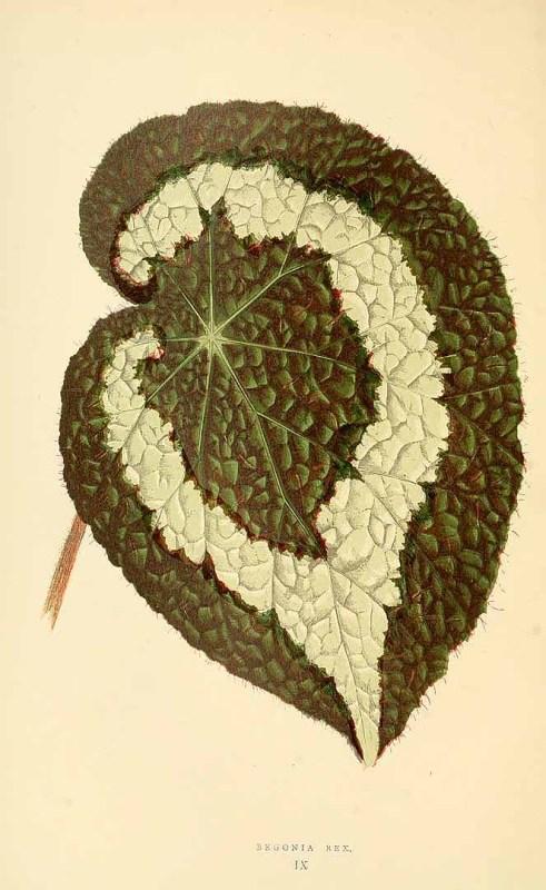 Free Vintage Leaves Image 35
