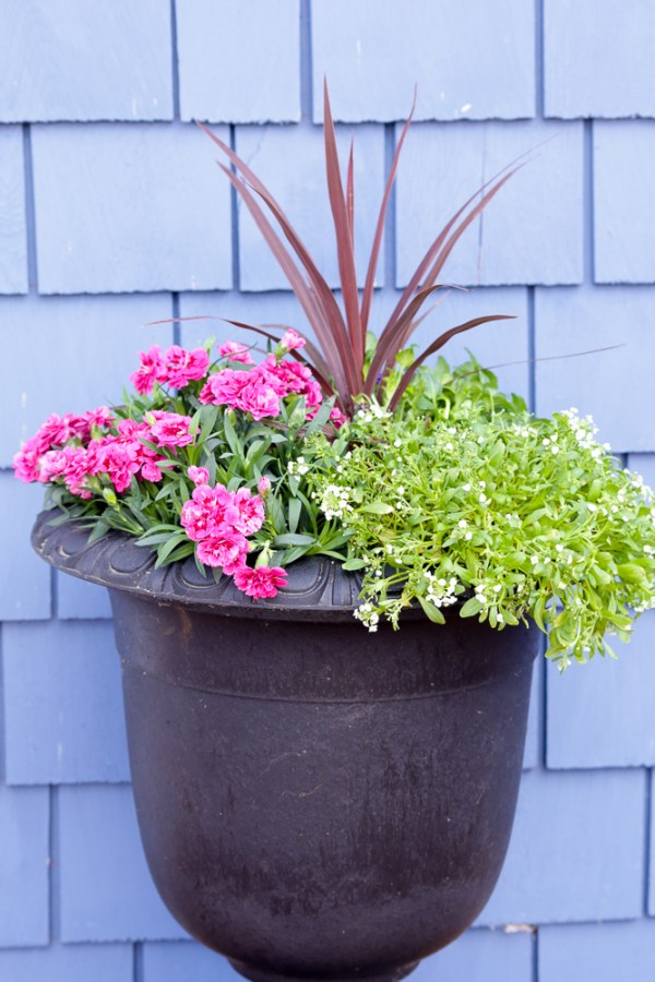 How To Create Beautiful Outdoor Pots And Planters   This Mamas Dance For Remodelaholic 10