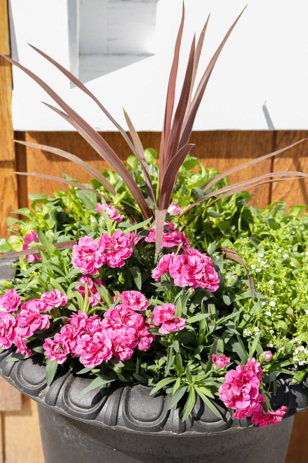 How To Create Beautiful Outdoor Pots And Planters | This Mamas Dance For Remodelaholic 29