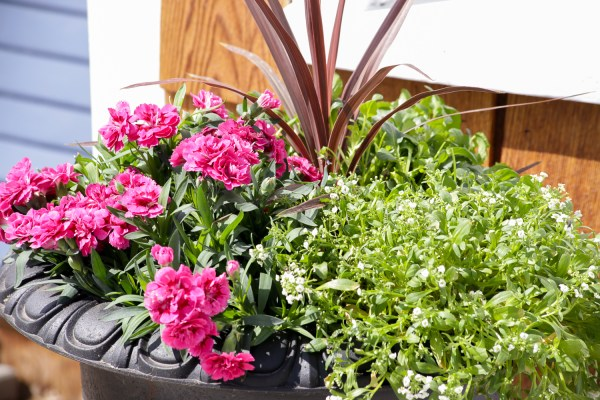 How To Create Beautiful Outdoor Pots And Planters   This Mamas Dance For Remodelaholic 30