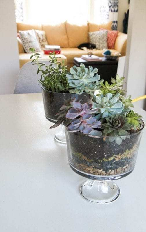 How To Make A Terrarium Filled With Succulents