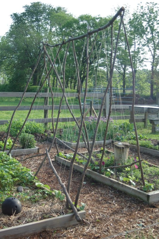 DIY Vegetable Garden Ideas Build A Bean Frame Trellis With Branches, Featured On Remodelaholic