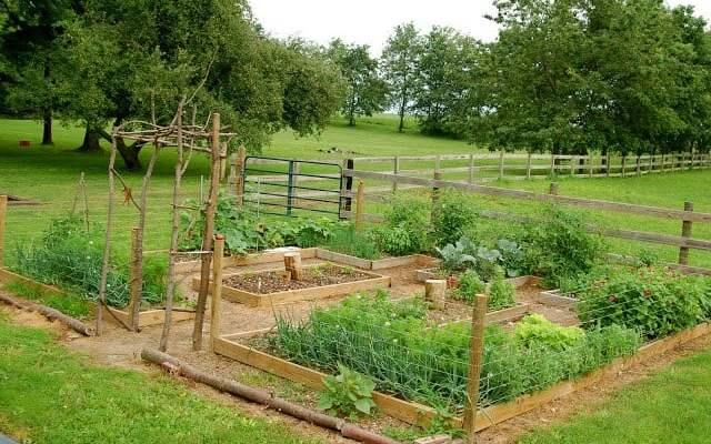 10 DIY Vegetable Garden Ideas for Raised Garden Beds and Trellises
