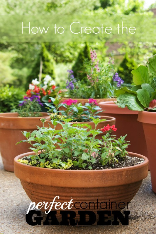 Continer Garden, Several Garden Pots With Plants And Flowers Growing