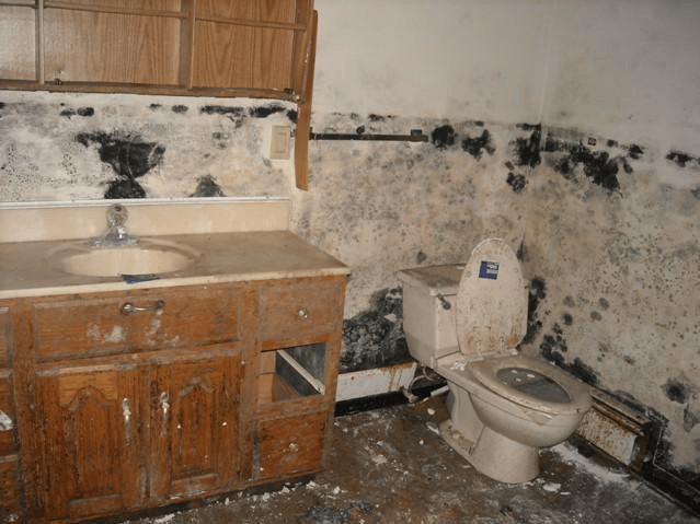 Black Mold in a Foreclosed House