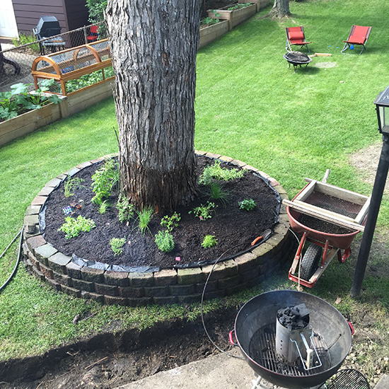 Blog-tree ring 7