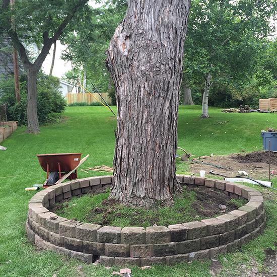 blog-tree ring5