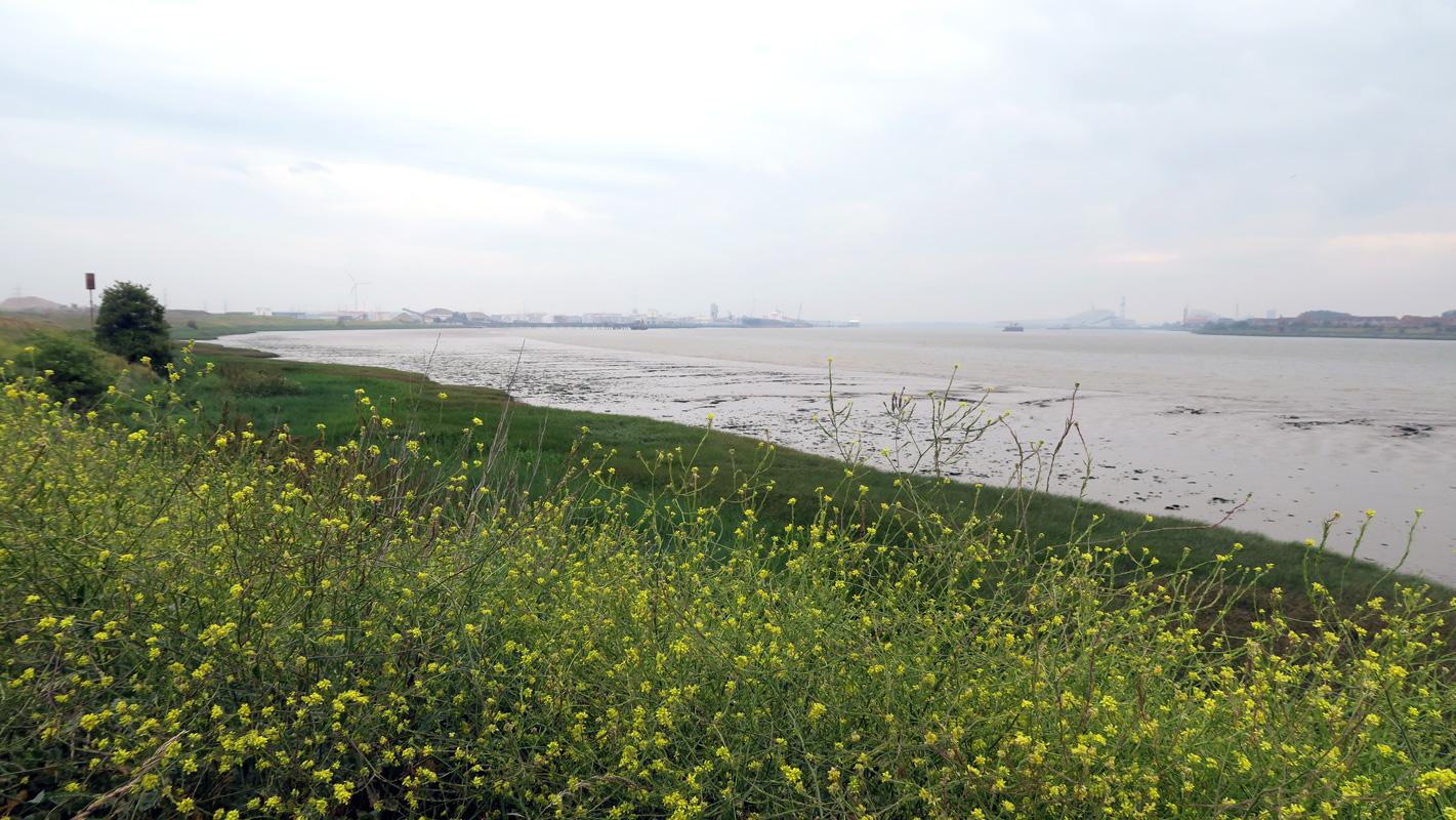 Wild flowers, grassland and saltmarsh line the Thames at Barking Riverside