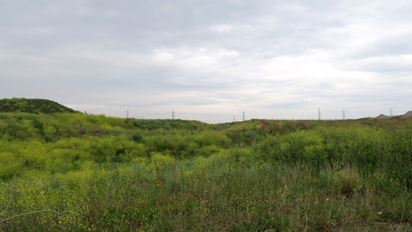 Waves of landfill at Barking Riverside, colonised by wildflowers and wildlife