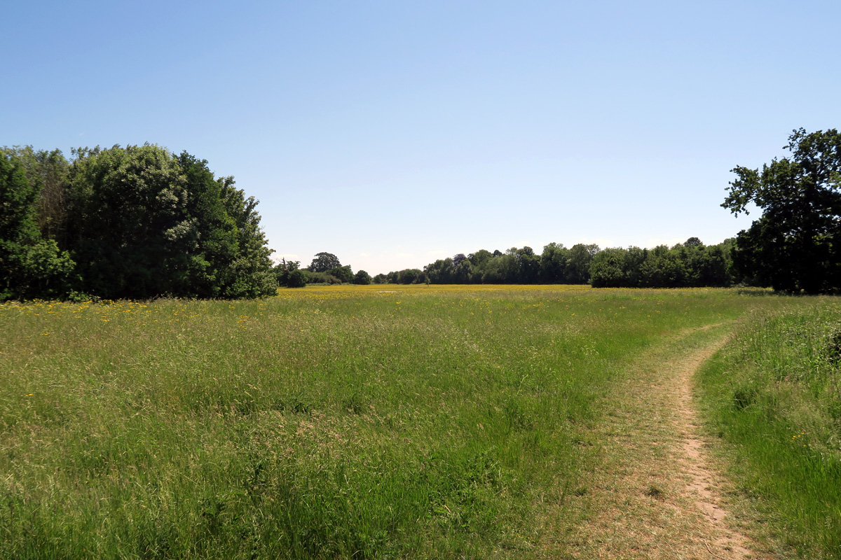 Meadows, woodland and a path