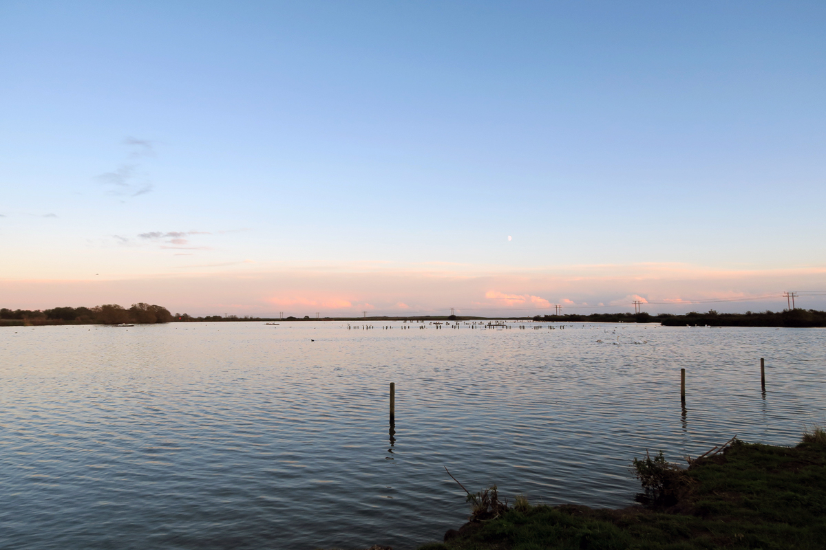 Stannets Creek, a wide expanse of water with birdlife in the distance. The moon is rising into a pale sky above a low bank of pink cloud on the horizon. Paglesham.