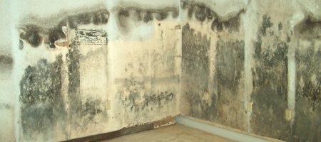 Remove Mold From Walls In Bathroom