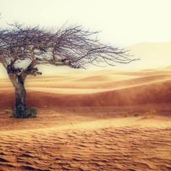 desert with a standing grey dead tree