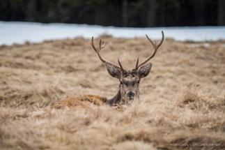 Cervo nel Parco di Paneveggio - Nikon D810, 400mm (85-400mm ƒ4.5-5.6) 1/10 ƒ/8 ISO 200