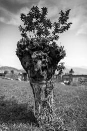 Almenno San Salvatore, vicino a San Giorgio, maggio 2015. Nikon D810, 24mm (24.0mm ƒ/1.4) 1/2500 /1.4 ISO 31