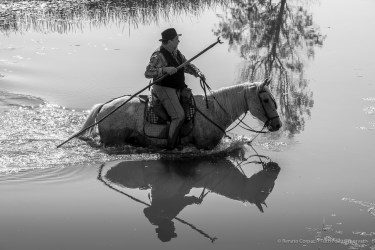 Antoine, Mas de la Pinede, Saintes Maries de la Mer. 27 settembre 2014 - Nikon D810, 112mm (80-400 ƒ/4.5-5.6) 1/1250sec ƒ/13 ISO 1000