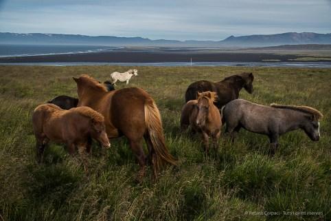 Horses pasturing on the roadside. Nikon D750, 31 mm (24-120.0 mm ƒ/4) 1/640 sec ƒ/7.1 ISO 800