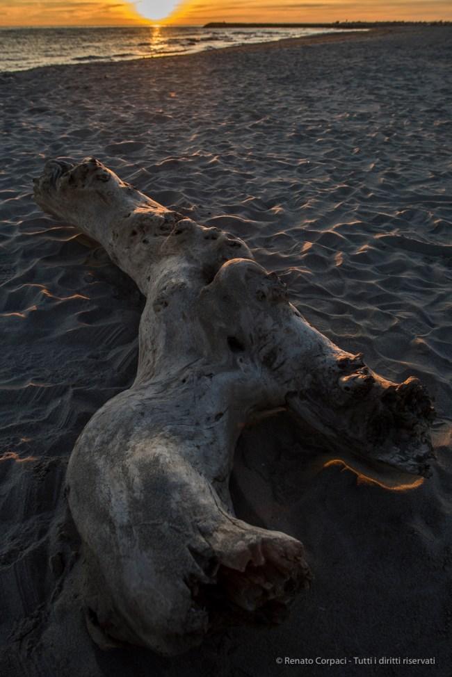 A log on the western beach at sunset. Nikon D810, 24mm (24.0mm ƒ/1.4) 1/100 sec ƒ/5.6 ISO 100