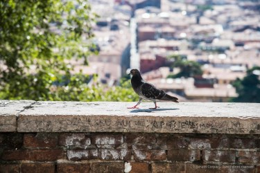 "A pigeon on top of the Teatro Romano. Nikon D810 120 mm (24-120.0 mm ƒ/4) 1/200"" ƒ/5.6 ISO 100"