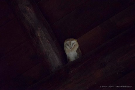 "A barn owl roosted under the roof of the visitor center at El Acebuche. Nikon D750, 400 mm (80-400 mm ƒ/4.5-5.6) 1/40"" ƒ/5.6 ISO 25600"