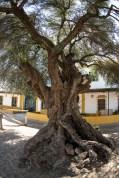 "El Rocío, Plaza del Acebuchal. Nikon D810, 16 mm (16.0 mm ƒ/2.8) 1/40"" ƒ/5.6 ISO 64"